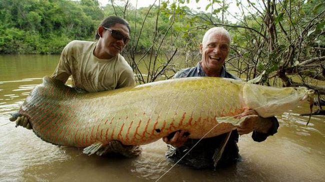 Arapaima (riba): opis, staništa i slike