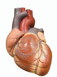 lijevo srce blok