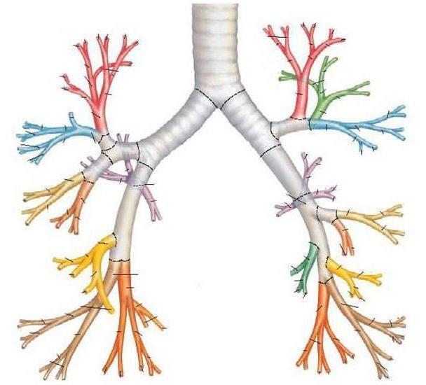Bronhijalna vrste disanja i oblici poremećaja disanja