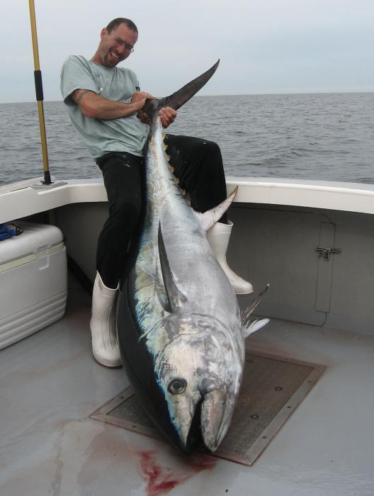 Самая дорогая в мире рыба тунец