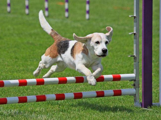 usposabljanje agility