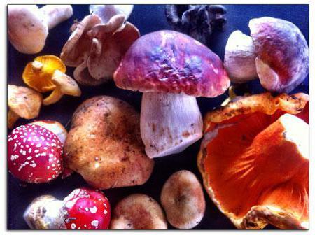 Što je mikologija? Mikologija - proučavanje gljiva