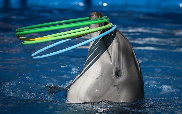 Дельфинарии крыма - удивительные места
