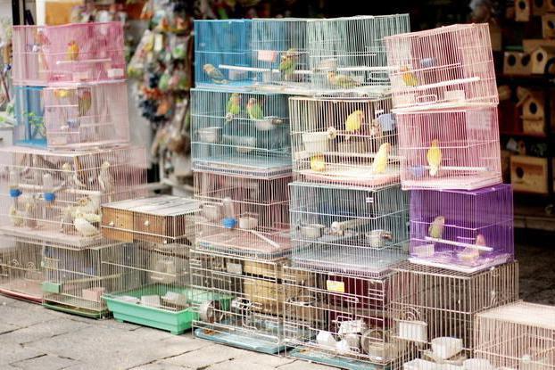 Gdje je tržište ptica u Jekaterinburg?
