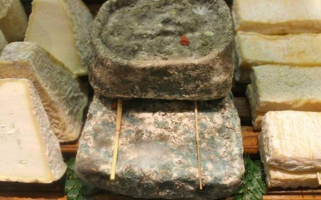 гнилой сыр