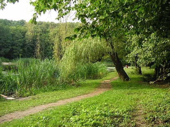 Голосеевский парк в киеве: достопримечательности, фото