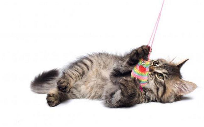 kako napraviti igračke za mačiće
