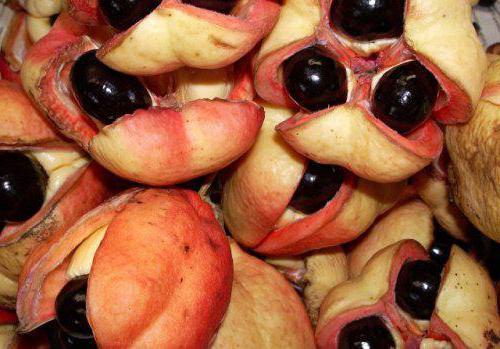 ядовитые фрукты мира