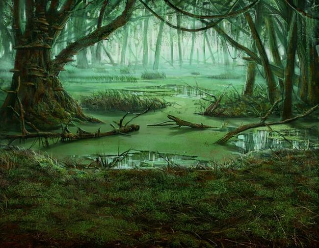šta dreams marsh zeleni