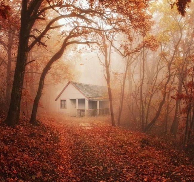 šta snovi stare kuće