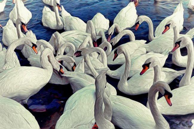 Zašto san labudova (voda, na nebu)? Zašto sanjam o Black Swan?