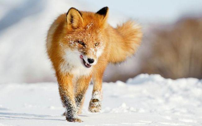 šta snovi divljih životinja