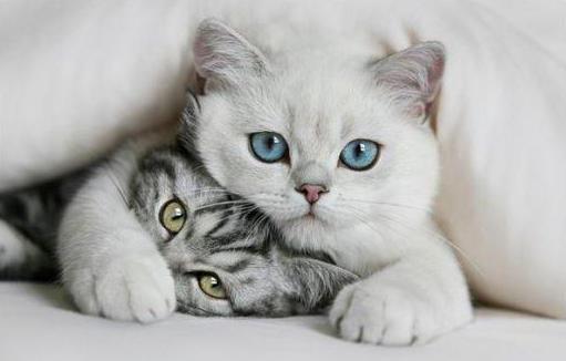 Как приучить взрослого кота к лотку? Туалет-домик для кошек. Беспородные коты с улицы: воспитание