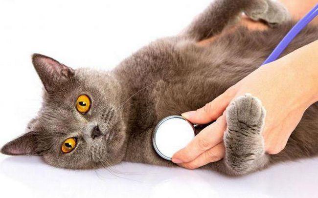 Как сделать кошке укол в холку: пошаговая инструкция и рекомендации