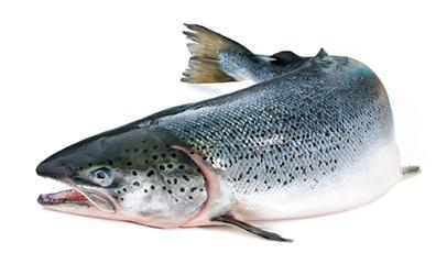 какая красная рыба самая жирная
