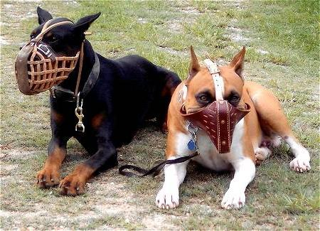 самая злая собака в мире
