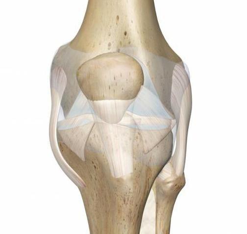 Коленный сустав: заболевания и лечение