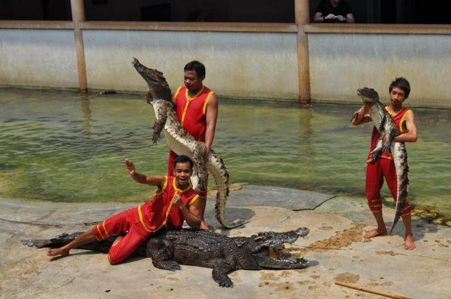 Crocodile Farm u Anapa Adresa