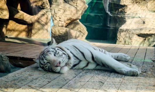 Лучший зоопарк в анапе