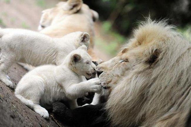 белогорск крым зоопарк