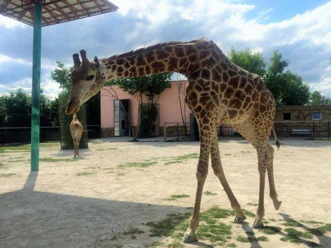 где в крыму зоопарки
