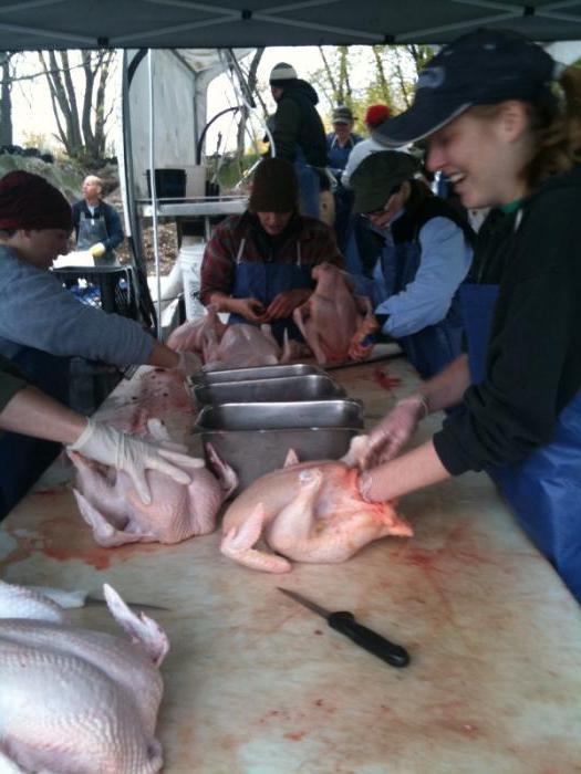 Meso: recikliranja. Oprema za preradu mesa, živine. Proizvodnju, skladištenje i preradu mesa