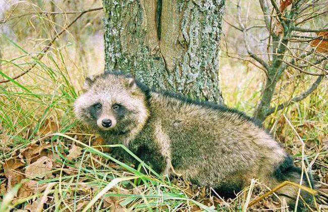 Smolensk Lakes National Park Životinje