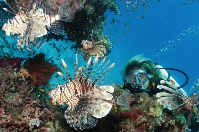 Grand Resort Hurghada 5 2014