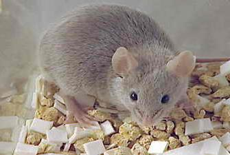где купить крысиный яд