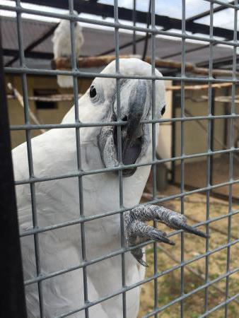 vrapci Bird Park