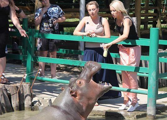 Sunny Island Krasnodar Zoo
