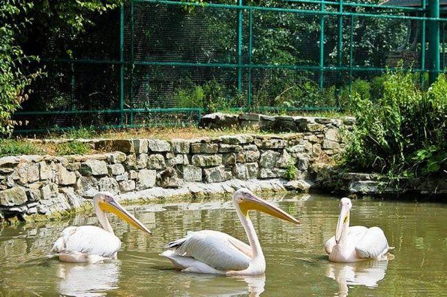 natuhaevskaya park divljih životinja