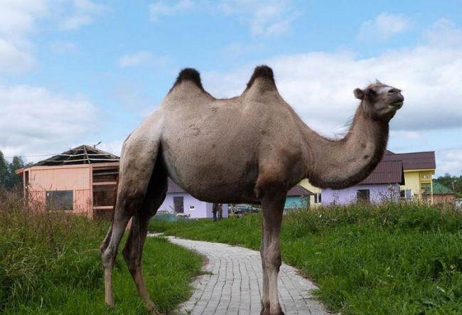 Batetskaya park divljih životinja