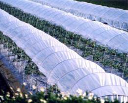 staklenika agronom hacienda recenzije