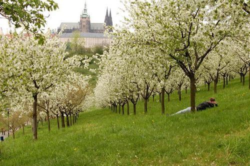 pogodp u Pragu maj