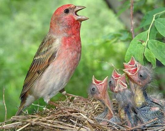 -foto sočivo ptica