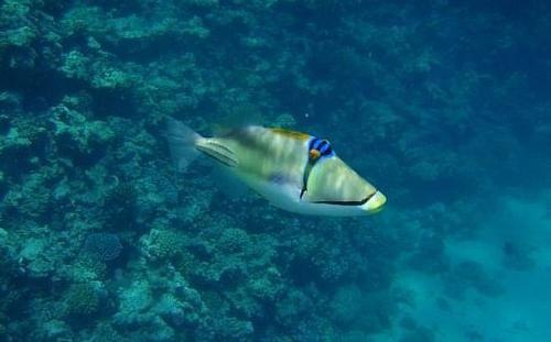 Otok Egipat raj Hurghada