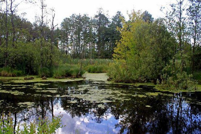 Райский отдых. Шацкие озера