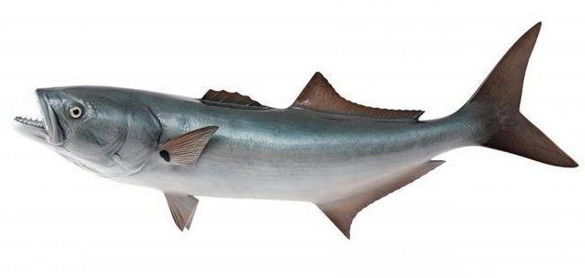 Ribe plave ribe: opis, navike i industrijski značaj