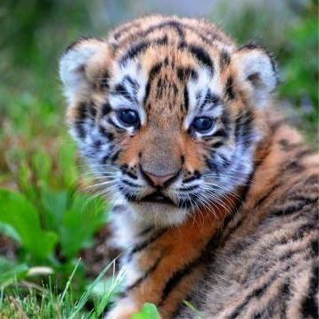 Krasnodar Safari Park cijene