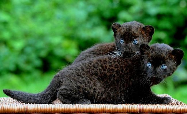 Krasnodar Safari Park fotografija