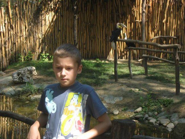 safari parku u Krasnodaru, cijena