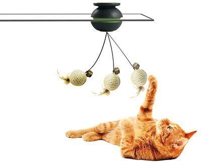 igračka za mace sa svojim rukama