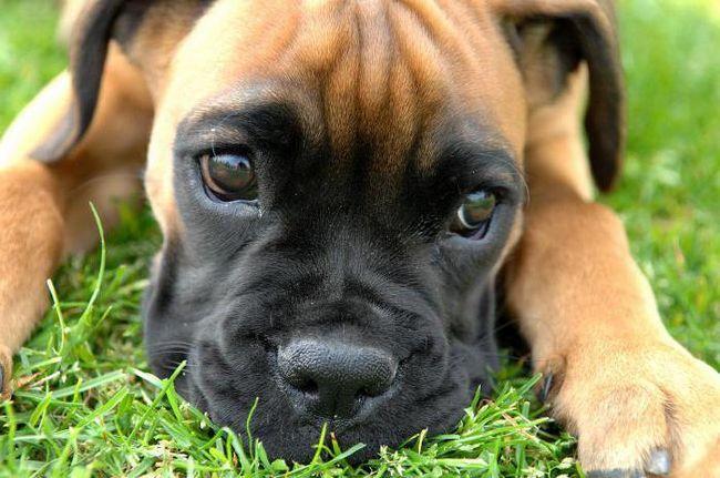Самая лучшая собака в мире - моя собака! Собаки-спасатели, собака-нянька. Самые верные собаки