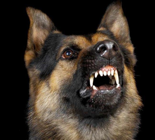 10 самых опасных собак