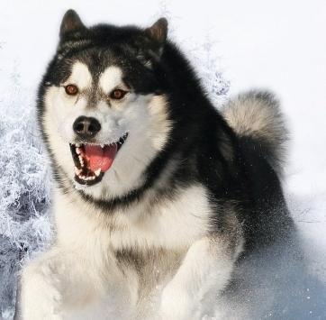 список самых опасных собак