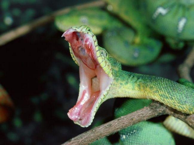 Морские змеи