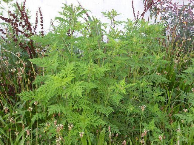Сезонная аллергия: симптомы, лечение, препараты