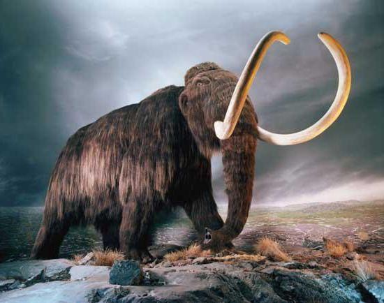 Mamuta: opis, ponašanje, distribuciju i izumiranje