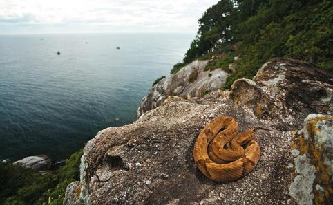 Смертельно опасный остров кеймада-гранде, бразилия